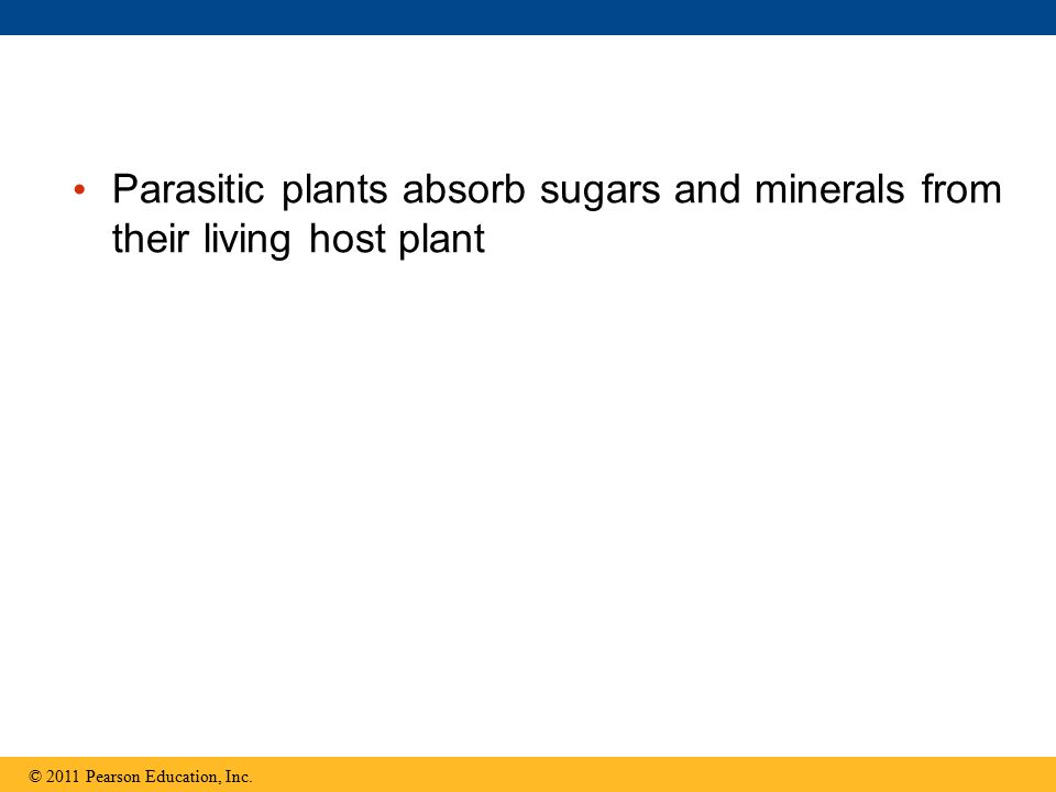 Parasitic plants absorb sugars and minerals from their living host plant © 2011 Pearson Education, Inc.