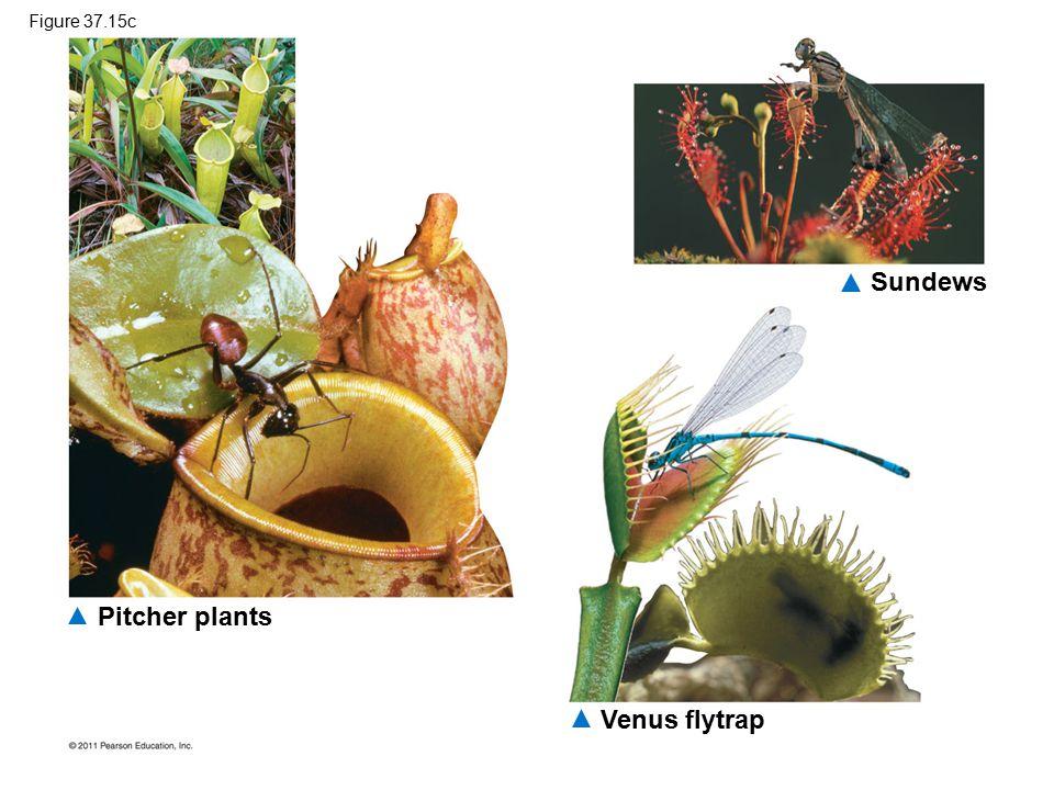 Pitcher plants Sundews Venus flytrap Figure 37.15c
