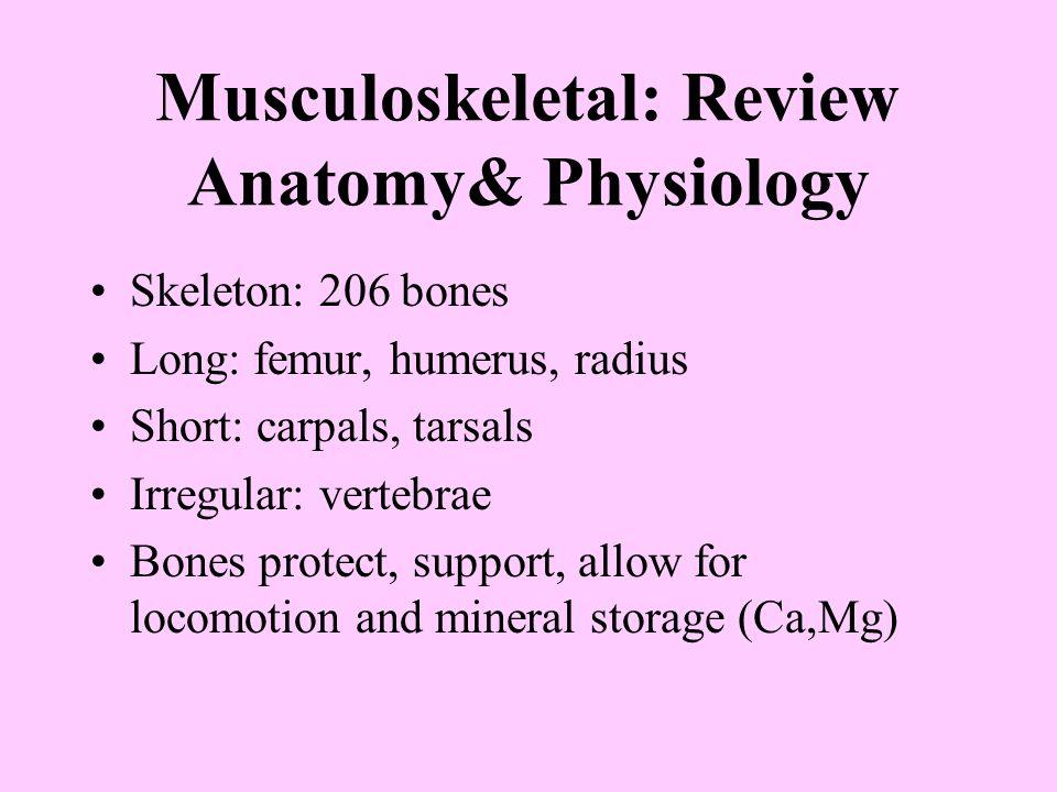 Musculoskeletal: Review Anatomy& Physiology Skeleton: 206 bones Long: femur, humerus, radius Short: carpals, tarsals Irregular: vertebrae Bones protec