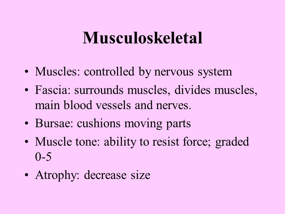Musculoskeletal Muscles: controlled by nervous system Fascia: surrounds muscles, divides muscles, main blood vessels and nerves.