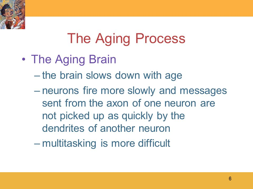 6 The Aging Process The Aging Brain –the brain slows down with age –neurons fire more slowly and messages sent from the axon of one neuron are not picked up as quickly by the dendrites of another neuron –multitasking is more difficult