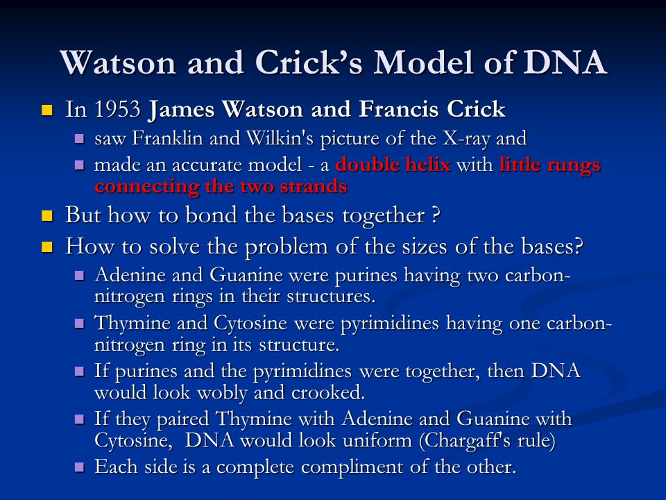 Watson and Crick's Model of DNA In 1953 James Watson and Francis Crick In 1953 James Watson and Francis Crick saw Franklin and Wilkin s picture of the X-ray and saw Franklin and Wilkin s picture of the X-ray and made an accurate model - a double helix with little rungs connecting the two strands made an accurate model - a double helix with little rungs connecting the two strands But how to bond the bases together .