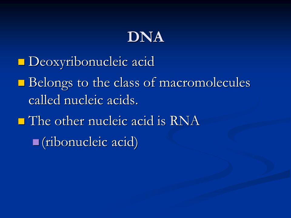DNA Deoxyribonucleic acid Deoxyribonucleic acid Belongs to the class of macromolecules called nucleic acids. Belongs to the class of macromolecules ca
