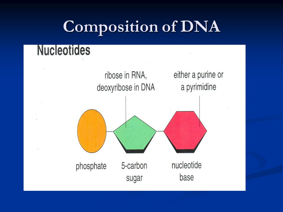 Composition of DNA