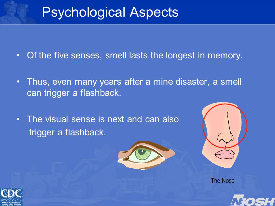 Psychological Aspects Of the five senses, smell lasts the longest in memory.