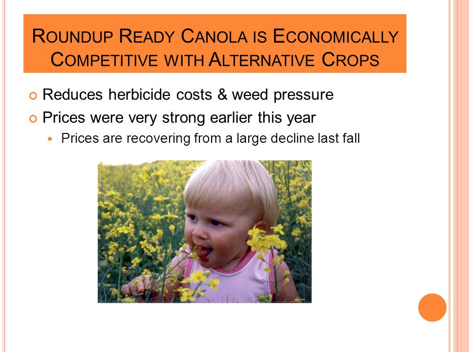 R OUNDUP R EADY C ANOLA IS E CONOMICALLY C OMPETITIVE WITH A LTERNATIVE C ROPS Reduces herbicide costs & weed pressure Prices were very strong earlier this year Prices are recovering from a large decline last fall