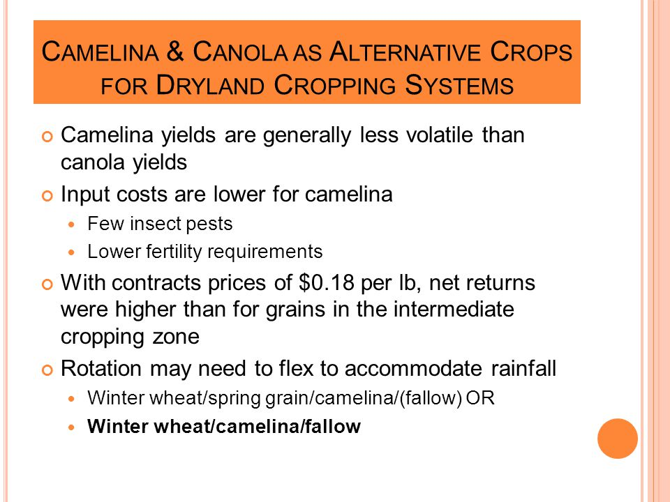 C AMELINA & C ANOLA AS A LTERNATIVE C ROPS FOR D RYLAND C ROPPING S YSTEMS Camelina yields are generally less volatile than canola yields Input costs are lower for camelina Few insect pests Lower fertility requirements With contracts prices of $0.18 per lb, net returns were higher than for grains in the intermediate cropping zone Rotation may need to flex to accommodate rainfall Winter wheat/spring grain/camelina/(fallow) OR Winter wheat/camelina/fallow