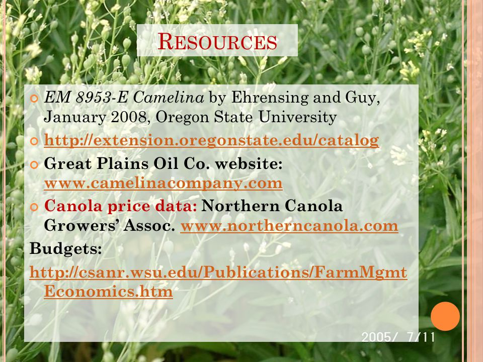 R ESOURCES EM 8953-E Camelina by Ehrensing and Guy, January 2008, Oregon State University http://extension.oregonstate.edu/catalog Great Plains Oil Co.