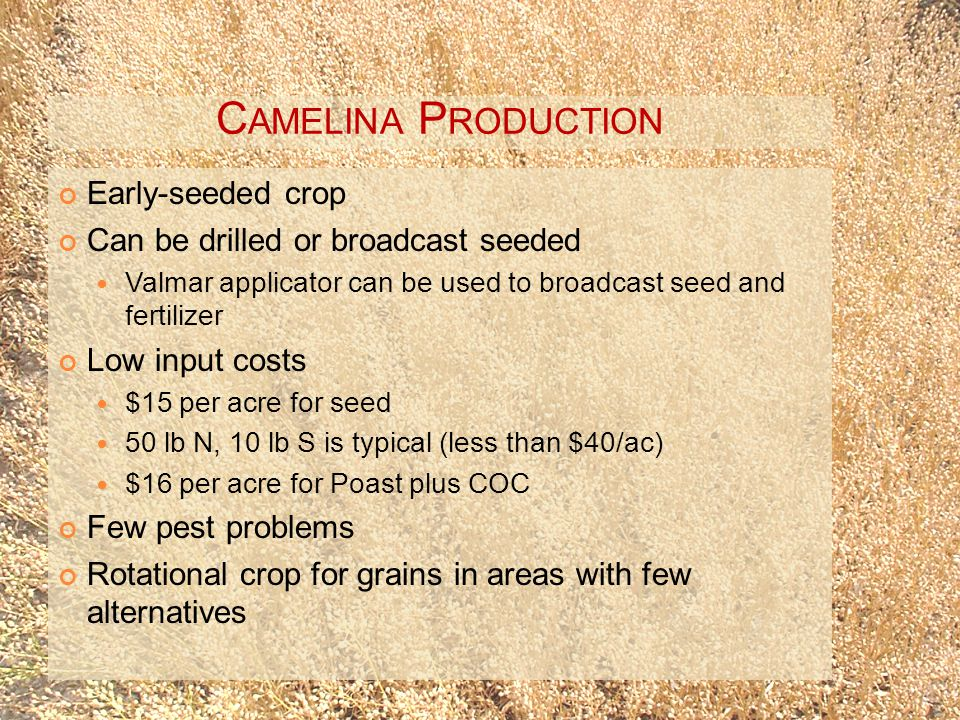 C AMELINA P RODUCTION Early-seeded crop Can be drilled or broadcast seeded Valmar applicator can be used to broadcast seed and fertilizer Low input costs $15 per acre for seed 50 lb N, 10 lb S is typical (less than $40/ac) $16 per acre for Poast plus COC Few pest problems Rotational crop for grains in areas with few alternatives