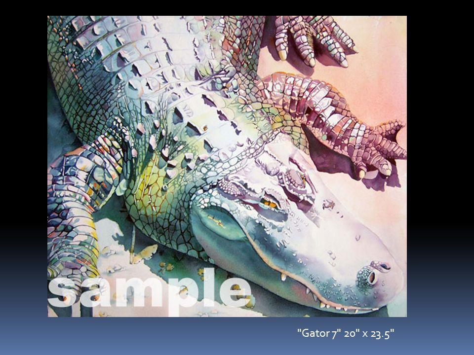 Gator 7 20 x 23.5