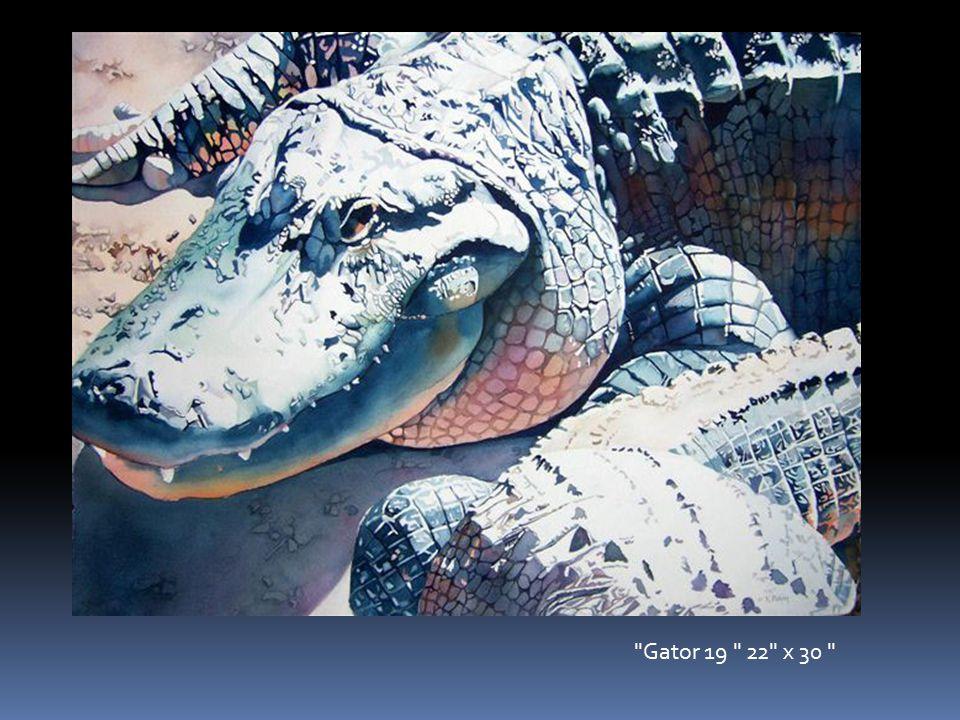 Gator 19 22 x 30