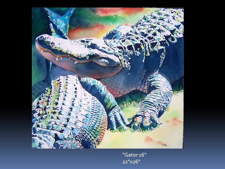 Gator 16 22 x26