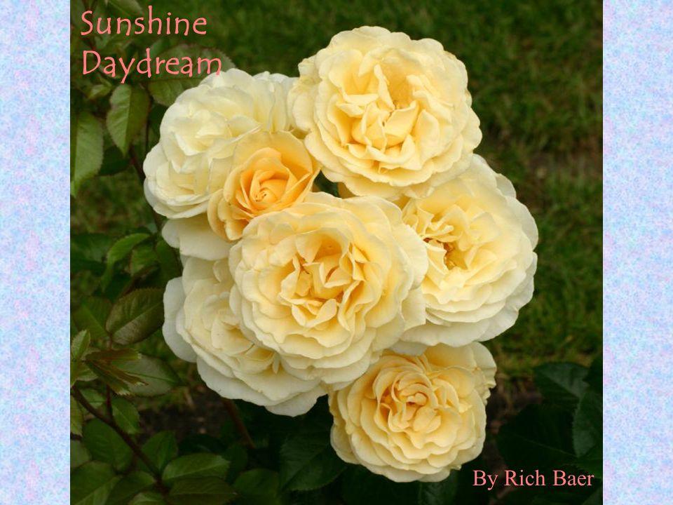 Sunshine Daydream By Rich Baer