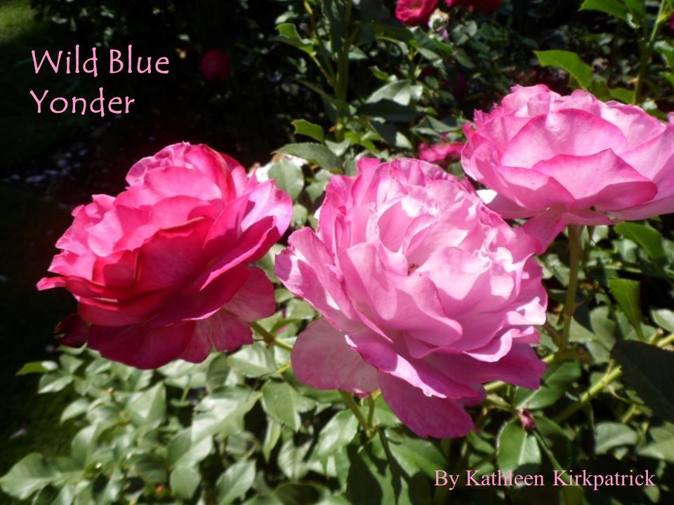 Wild Blue Yonder By Kathleen Kirkpatrick