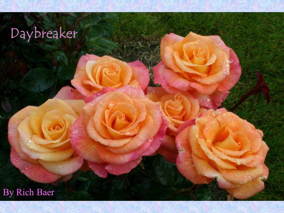 Daybreaker By Rich Baer
