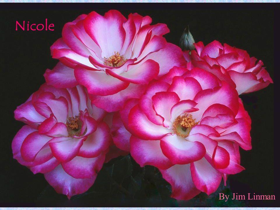 By Jim Linman Nicole