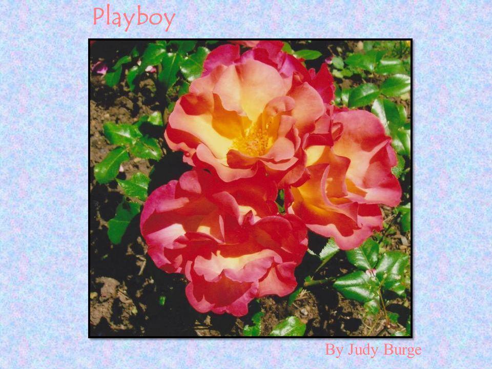 By Judy Burge Playboy