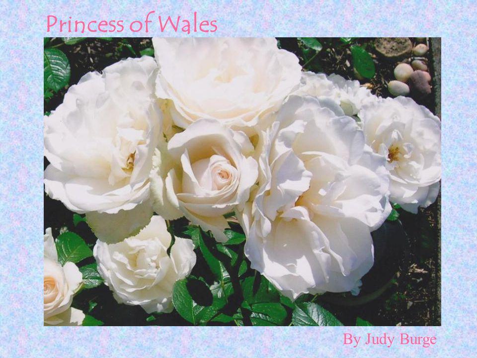 By Judy Burge Princess of Wales