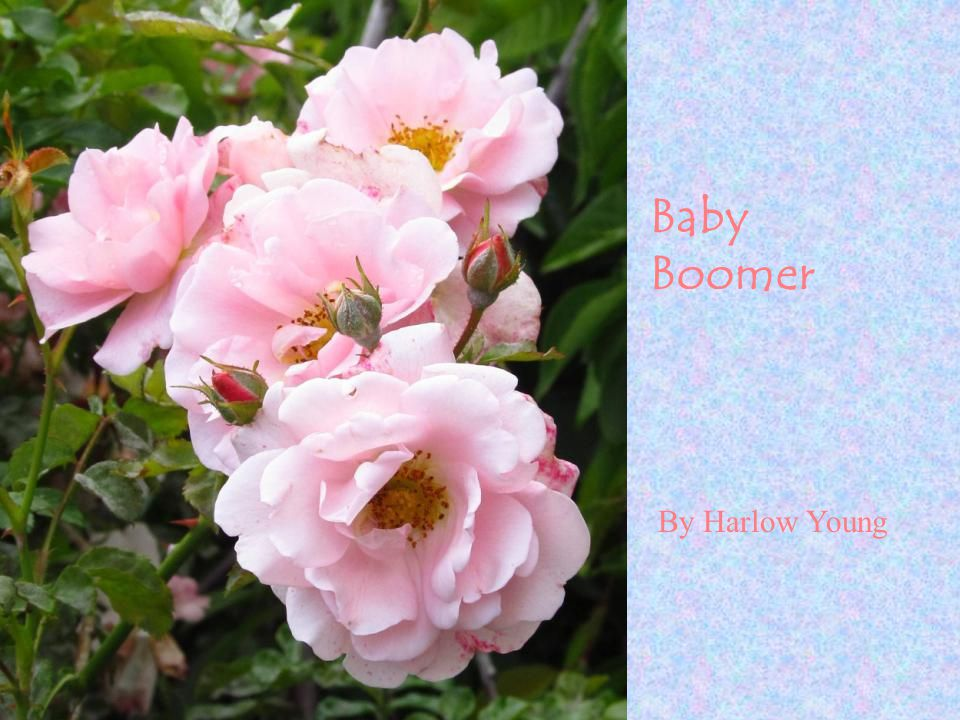 By Harlow Young Baby Boomer