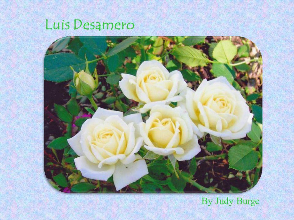 By Judy Burge Luis Desamero