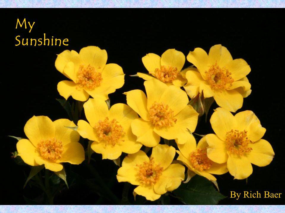 By Rich Baer My Sunshine