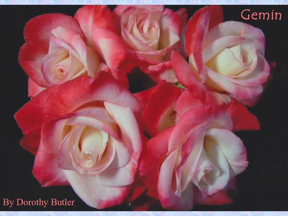 Gemin i By Dorothy Butler