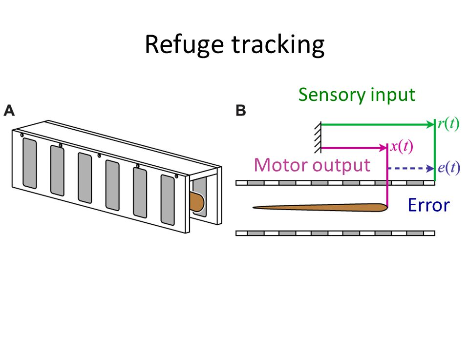 Sensory input Motor output Error