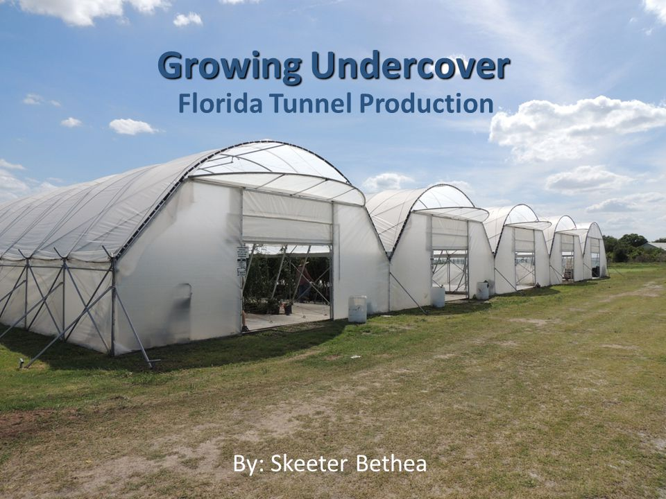 Florida Production Located nearly at sea level about 25 miles east of the Sarasota Coast on the Gulf of Mexico is Enza Zaden's Myakka City, Florida Research Station.