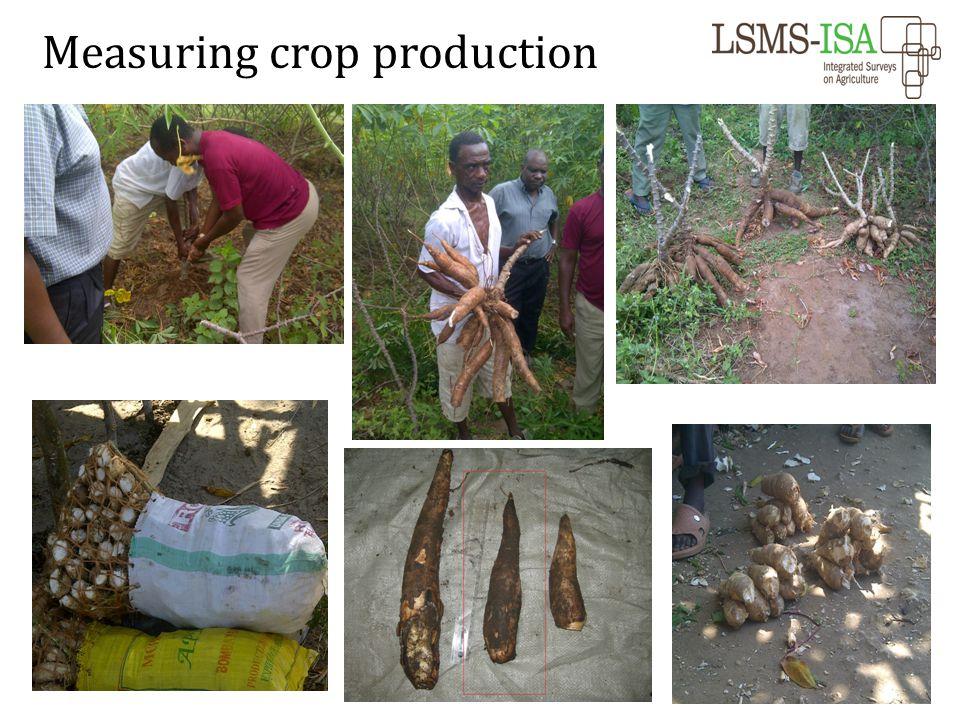 Measuring crop production
