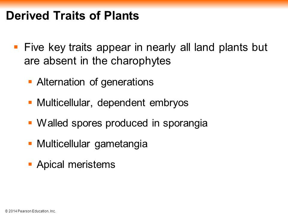 © 2014 Pearson Education, Inc. Derived Traits of Plants  Five key traits appear in nearly all land plants but are absent in the charophytes  Alterna