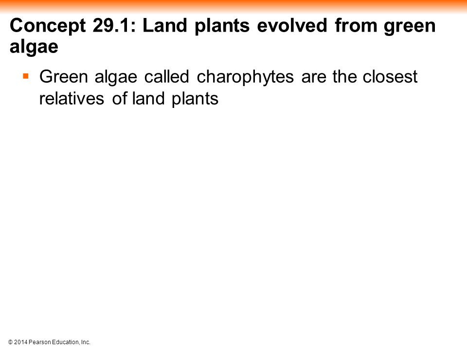 © 2014 Pearson Education, Inc. Concept 29.1: Land plants evolved from green algae  Green algae called charophytes are the closest relatives of land p