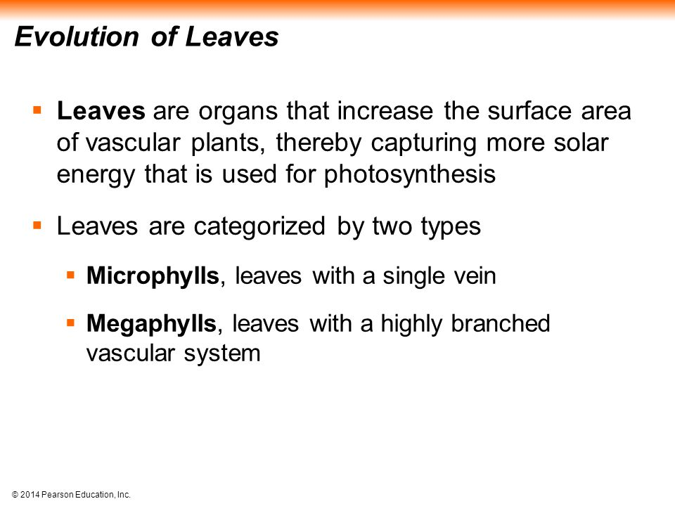 © 2014 Pearson Education, Inc. Evolution of Leaves  Leaves are organs that increase the surface area of vascular plants, thereby capturing more solar