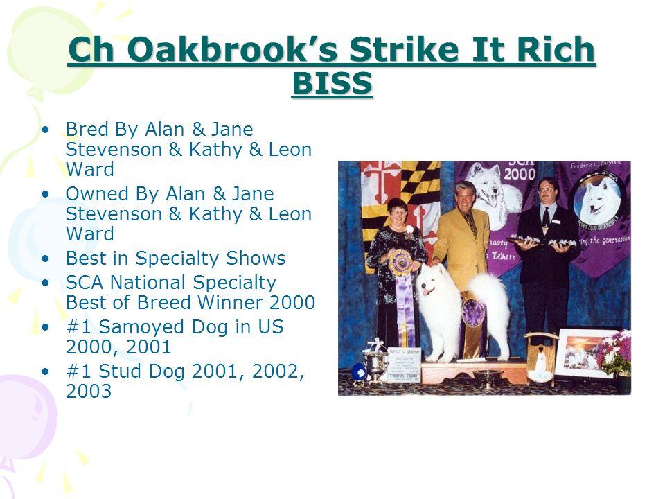 Ch Oakbrook's Strike It Rich BISS Bred By Alan & Jane Stevenson & Kathy & Leon Ward Owned By Alan & Jane Stevenson & Kathy & Leon Ward Best in Special