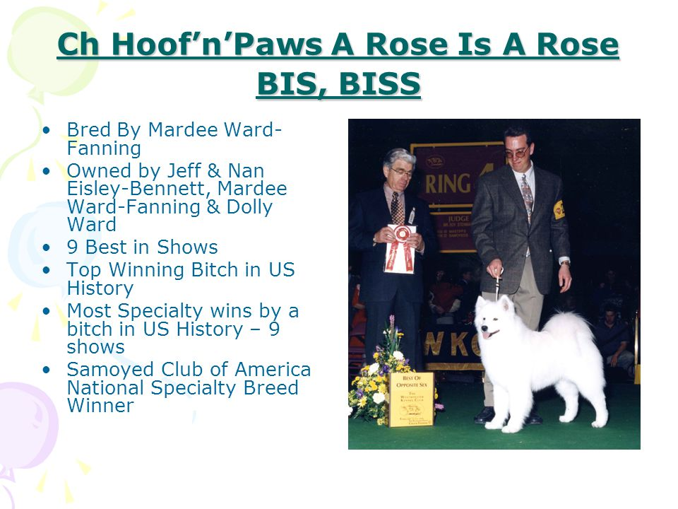 Ch Hoof'n'Paws A Rose Is A Rose BIS, BISS Bred By Mardee Ward- Fanning Owned by Jeff & Nan Eisley-Bennett, Mardee Ward-Fanning & Dolly Ward 9 Best in
