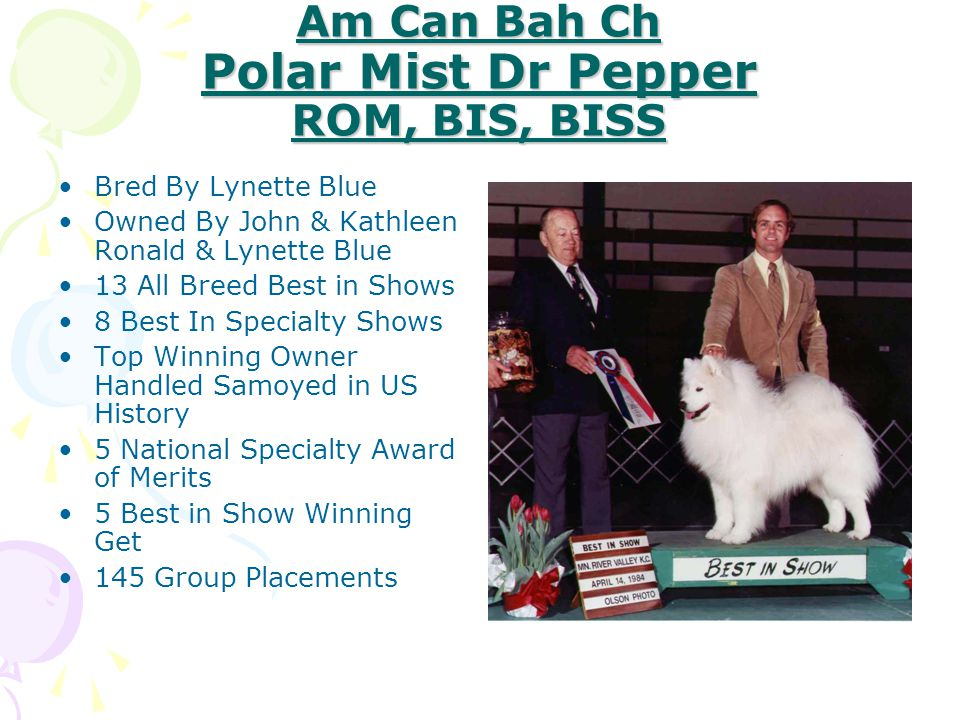 Ch Polar Mist My Blue Heaven BIS, BISS Bred By Lynette Blue Owned By John & Kathleen Ronald 5 Best In Shows, 2 Best In Specialty Shows #1 Samoyed All Breeds USA 2002 100 Group Placements 2 Award Of Merits, SCA National Specialties Dam of Samoyed Club of America National Specialty Best Futurity Winner Dam of Samoyed Club of America National Specialty Sweepstakes Winner