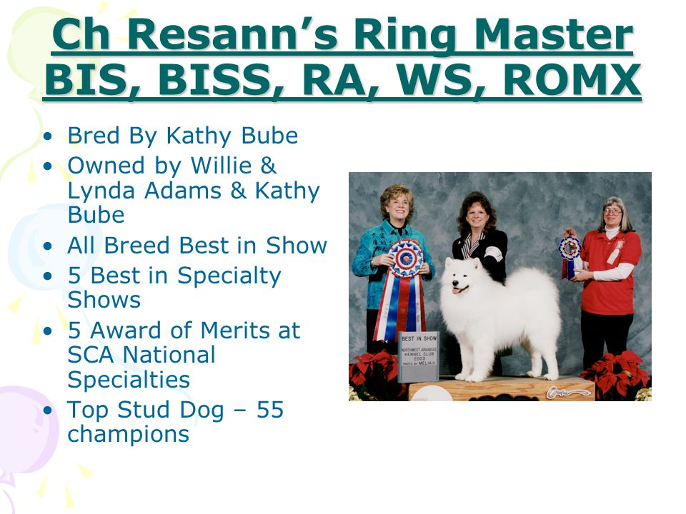 Ch Snow'trs Rap'd N Rhythm O'Snobast'n BIS, BISS Bred By Lisa Robertson & Lynette Blue Owned by Ken Granacki 5 All Breed Best in Shows 3 Best in Specialty Shows #1 Samoyed in US in 2005 85 Group Placements