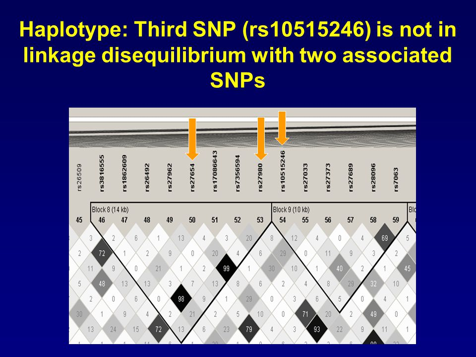 Analysis of all SNPs in CAST identifies a 3 SNP haplotype has highest association with variation in lung function rs27654-rs27980- rs10515246 T- A- A (34%) C- C –A (52%) C- C –G (13%) AvgFEV1CF% 0.002 (0.002) -0.009 (0.04) NS BayesFEV1CF% 0.0005 (0.003) -0.0007 (0.001) NS Residuals of BayesFEV1CF% after BMI adjustment 0.0005 (0.0007) -0.003 (0.006) NS P-values (p-value after 100k permutation)