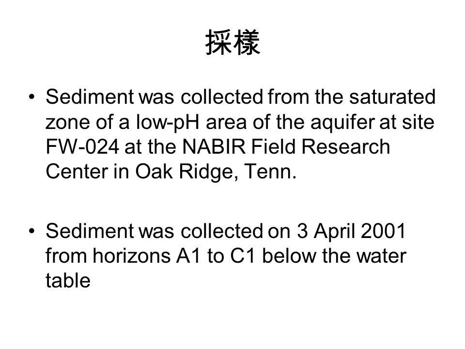 採樣 Sediment was collected from the saturated zone of a low-pH area of the aquifer at site FW-024 at the NABIR Field Research Center in Oak Ridge, Tenn.