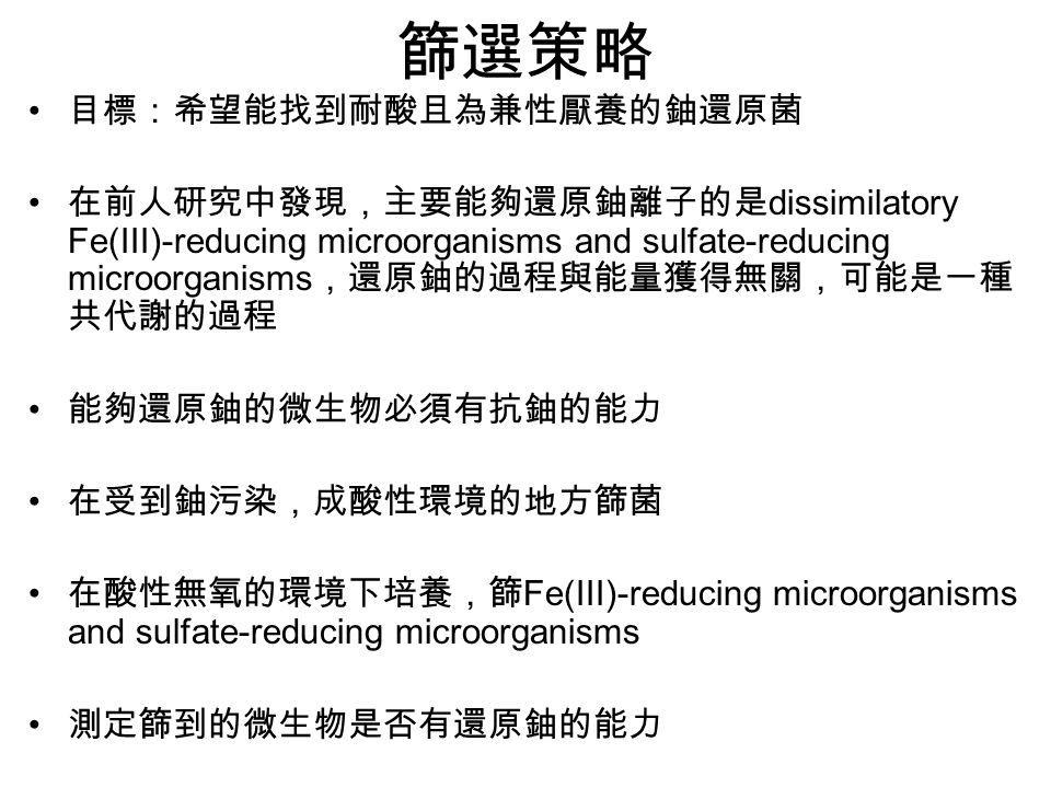 篩選策略 目標:希望能找到耐酸且為兼性厭養的鈾還原菌 在前人研究中發現,主要能夠還原鈾離子的是 dissimilatory Fe(III)-reducing microorganisms and sulfate-reducing microorganisms ,還原鈾的過程與能量獲得無關,可能是一種 共代謝的過程 能夠還原鈾的微生物必須有抗鈾的能力 在受到鈾污染,成酸性環境的地方篩菌 在酸性無氧的環境下培養,篩 Fe(III)-reducing microorganisms and sulfate-reducing microorganisms 測定篩到的微生物是否有還原鈾的能力