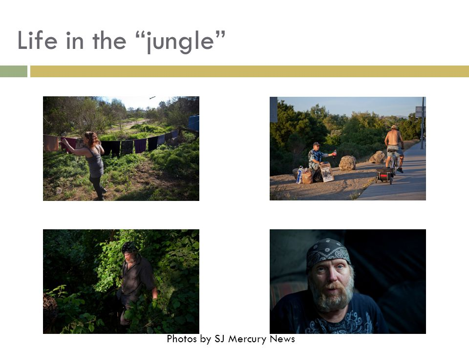 "Life in the ""jungle"" Photos by SJ Mercury News"