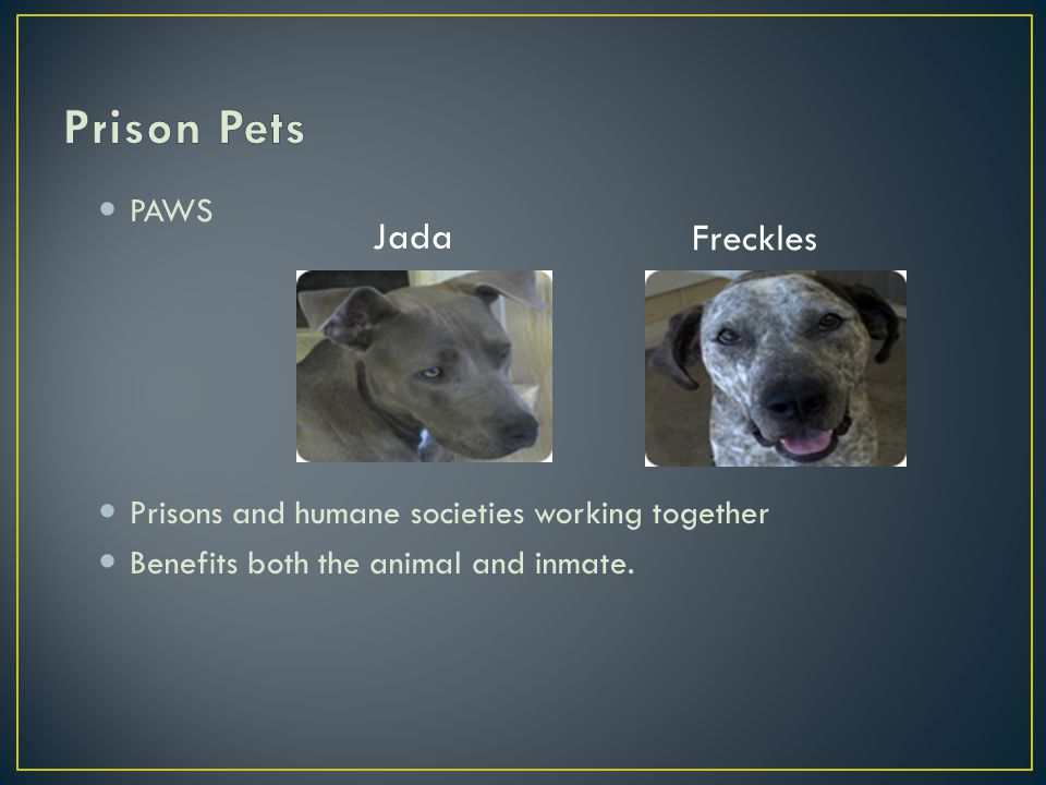 PAWS Prisons and humane societies working together Benefits both the animal and inmate.