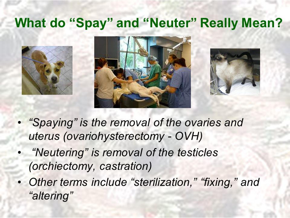 What do Spay and Neuter Really Mean.