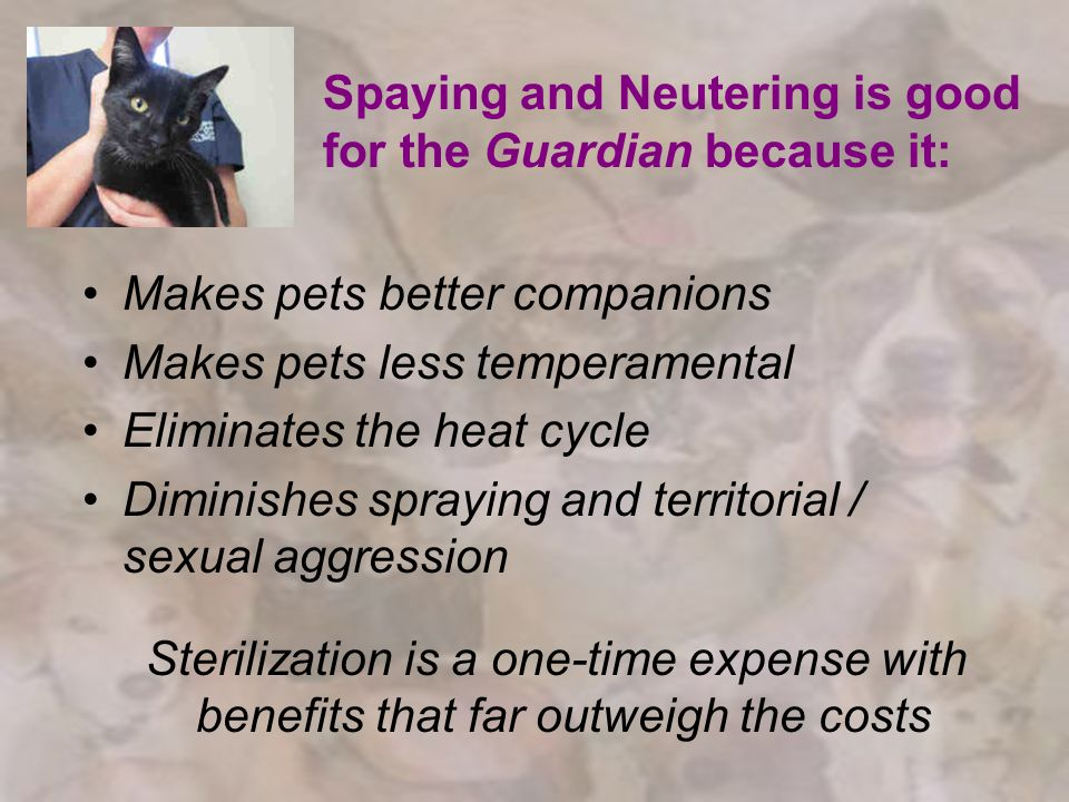 Spaying and Neutering is good for the Guardian because it: Makes pets better companions Makes pets less temperamental Eliminates the heat cycle Diminishes spraying and territorial / sexual aggression Sterilization is a one-time expense with benefits that far outweigh the costs