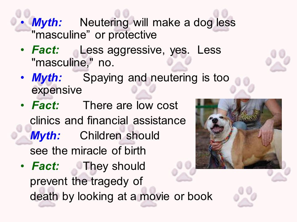 Myth:Neutering will make a dog less masculine or protective Fact:Less aggressive, yes.