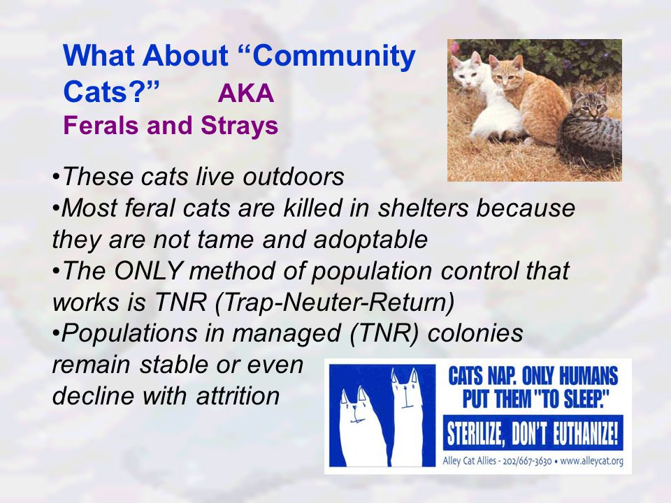 What About Community Cats AKA Ferals and Strays These cats live outdoors Most feral cats are killed in shelters because they are not tame and adoptable The ONLY method of population control that works is TNR (Trap-Neuter-Return) Populations in managed (TNR) colonies remain stable or even decline with attrition
