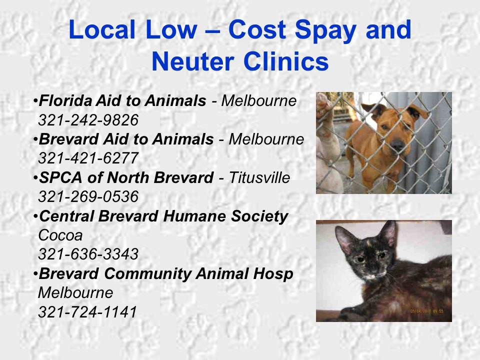 Local Low – Cost Spay and Neuter Clinics Florida Aid to Animals - Melbourne 321-242-9826 Brevard Aid to Animals - Melbourne 321-421-6277 SPCA of North Brevard - Titusville 321-269-0536 Central Brevard Humane Society Cocoa 321-636-3343 Brevard Community Animal Hosp Melbourne 321-724-1141