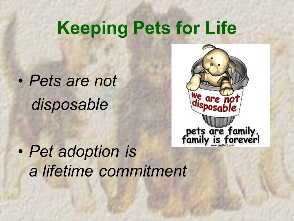 Keeping Pets for Life Pets are not disposable Pet adoption is a lifetime commitment