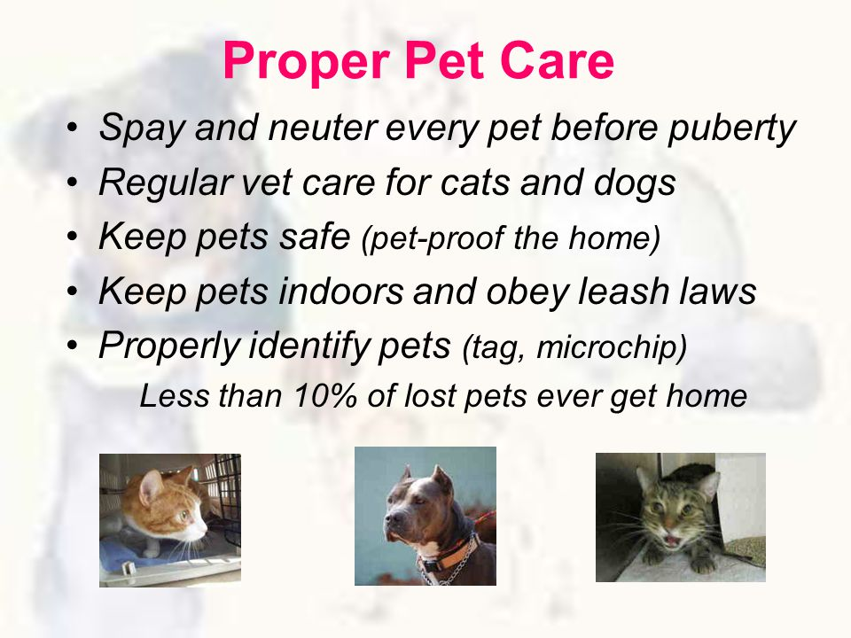 Proper Pet Care Spay and neuter every pet before puberty Regular vet care for cats and dogs Keep pets safe (pet-proof the home) Keep pets indoors and obey leash laws Properly identify pets (tag, microchip) Less than 10% of lost pets ever get home
