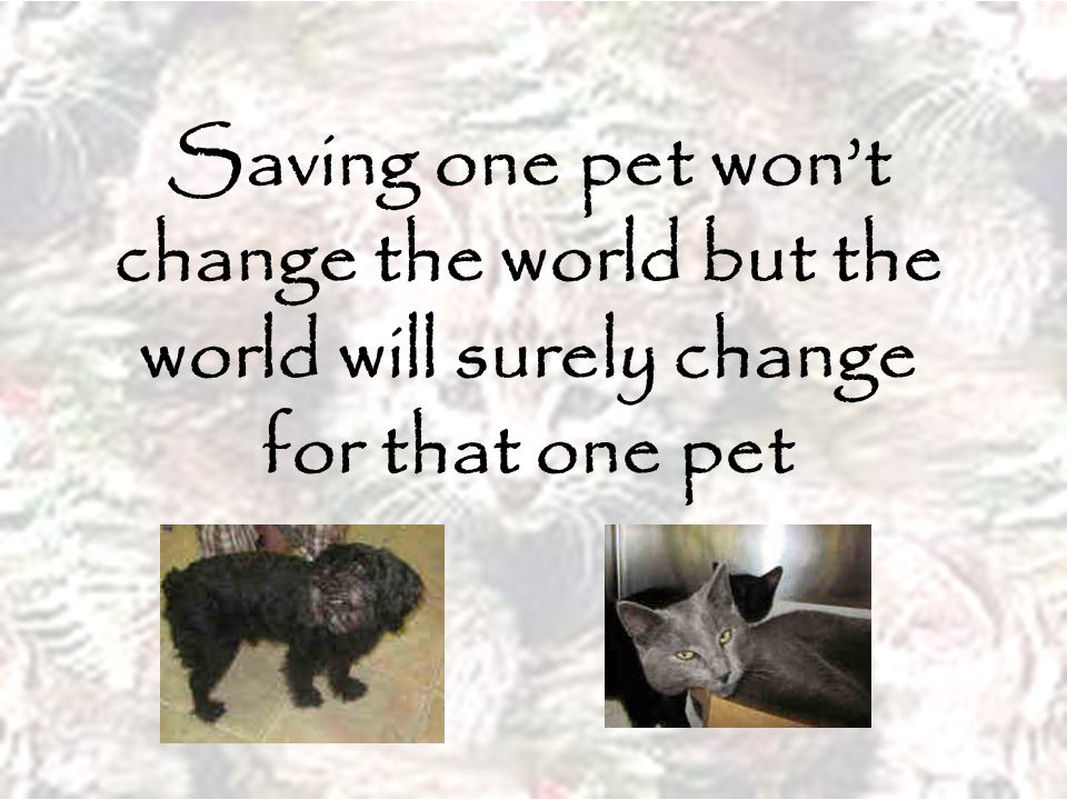 Saving one pet won't change the world but the world will surely change for that one pet