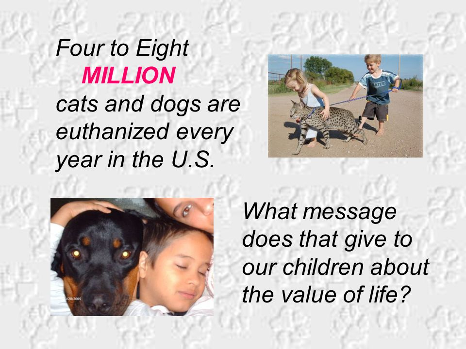 Four to Eight MILLION cats and dogs are euthanized every year in the U.S.